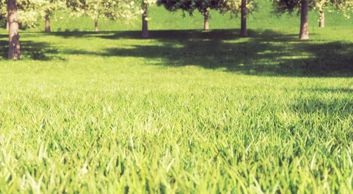 V-RAY GRASS & FUR